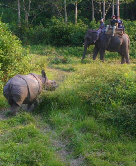 adventure in jungle - mtnepal